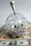 Piggy bank with one dollar on top Stock Photos