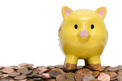 Piggy Bank and Pennies. Cute yellow piggy bank on a huge pile of pennies. Isolated on white Royalty Free Stock Images
