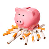 Piggy Bank on pile of Cigarettes isolated on white. Concept Stock Images