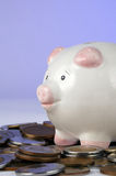 Piggy bank and pile of coins. Piggy bank or money box on pile of coins, blue studio background royalty free stock image