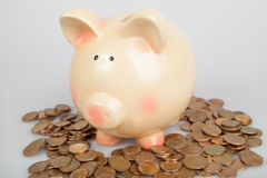 Piggy bank on  pile of coins Stock Photos