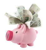 Piggy bank with polish money Stock Photo