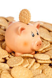 Piggy bank with round cookie on back Stock Image