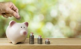 Piggy bank save coins, saving money concept stock photo