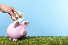 Piggy Bank saving money grass blue sky copy space Stock Photos