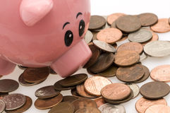 Piggy bank and scattered money. Pink piggy bank with nose smelling scattered denominational coins Royalty Free Stock Image