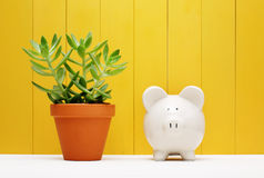 Piggy Bank Beside Small Plant on a Pot Stock Image
