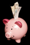 Piggy bank with sterling money notes Stock Photography