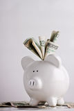 Piggy bank stuffed with money. Huge savings, lots of money, or lottery windfall Royalty Free Stock Photography