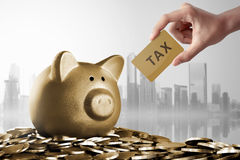 Piggy bank with Tax card sign. Over gold coin background royalty free stock photos