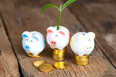 Piggy bank with tree growing from it  Growing your money Royalty Free Stock Images