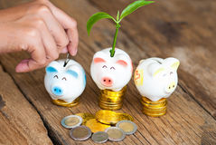Piggy bank with tree growing from it.Growing your  Royalty Free Stock Photos
