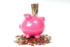 Piggy bank with USD notes Stock Photos