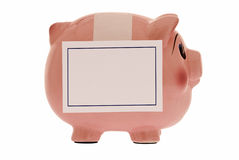 Piggy Bank Wearing Blank Sign Stock Images