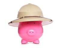 Piggy bank wearing safari hat Royalty Free Stock Images