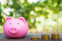 Hand putting gold coins into piggy bank Royalty Free Stock Photo