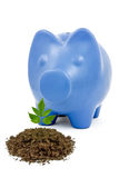 Piggy bank and young tree Royalty Free Stock Photos