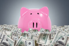 Piggy Banks in Dollar Farm. Big pink piggy bank in one hundred dollar money farm on dark background stock photos