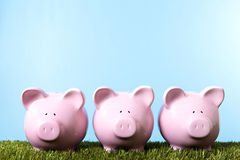 Piggy Bank row summer savings plan grass blue sky copy space Royalty Free Stock Photography