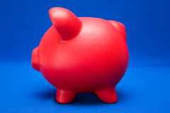Piggy on Blue Royalty Free Stock Image