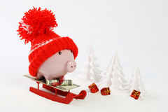 Piggy box with red hat with pompom standing on red sled on snow and around are snowbound trees - toboggan. Piggy box with red hat with pompom standing on red Stock Photo
