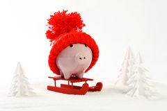 Piggy box with red hat with pompom standing on red sled on snow and around are snowbound trees Royalty Free Stock Photos