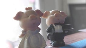 Piggy bride and piggy groom with bouquet of roses in front of wall stock video