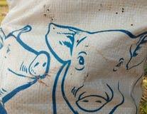 Piggy canvas image stock photos