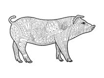 Piggy coloring book for adults vector Royalty Free Stock Images
