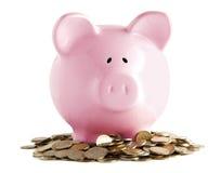 Piggy cor-de-rosa Fotografia de Stock