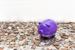 The Piggy Finding Food. A purple piggy bank above coins Royalty Free Stock Images