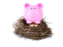 Piggy golden nest egg. Piggy bank nesting on golden egg Stock Images