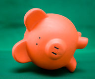 Piggy on Green Stock Image