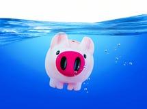 Piggy in het Water Royalty-vrije Stock Afbeelding