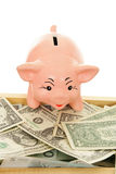 Piggy mit Geld Stockfotos