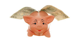 Piggy with money. Fly money-box piggy with money on white background Royalty Free Stock Images