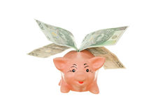 Piggy with money. Fly money-box piggy with money on white background Stock Images