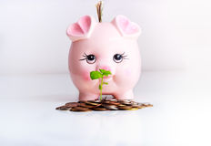 Piggy money bank business concept Stock Photo