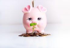 Piggy money bank business concept. Pink piggy money box business concept with dollar,coins and green plant Stock Photo