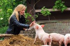 Piggy nosar Royaltyfria Foton