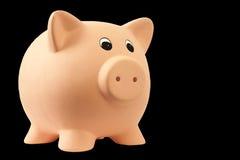 piggy pig royaltyfri fotografi
