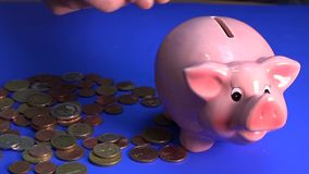 Piggy pig on the blue background. stock video footage