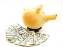Piggy piggy bank on white background Stock Image
