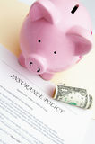 Piggy policy. Insurance policy and piggy bank with dollar Stock Image