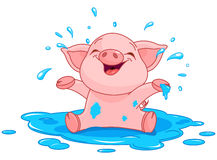 Piggy in a puddle Stock Images