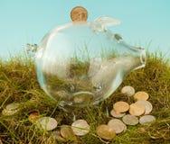 Piggy Querneigung im Gras Lizenzfreies Stockfoto
