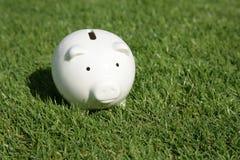 Piggy Querneigung und grünes Gras Lizenzfreie Stockfotos