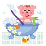 Piggy showering in bath Stock Photos