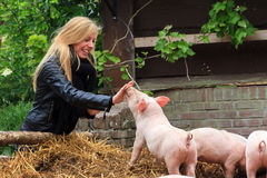 Piggy snouts Royalty Free Stock Photos
