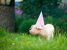 Piggy standing in garden on green grass wearing pink festive cap. stock image